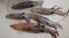 厩イカのイメージ画像