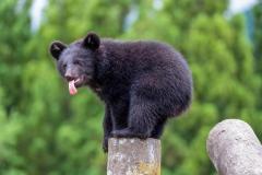 クマにも春がやってきた! くまくま園、営業開始のイメージ画像