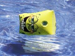 本物のスポンジ・ボブとパトリック・スターが深海底で並んで撮影される→残酷すぎる真実が明らかにのイメージ画像
