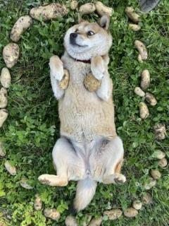 じゃがいも魔法陣で芋犬召喚?ワンコの表情が良い味だしてるのイメージ画像