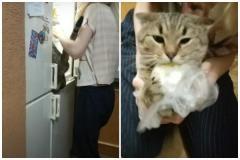 冷蔵庫に駆け込みマッシュポテトを強奪しようとして現行犯逮捕された猫が話題に!のイメージ画像