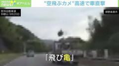 「空飛ぶカメ」高速道路で車直撃 大阪のイメージ画像