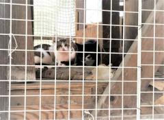 「そのうち死ぬから」と子猫を放置 雌雄を隔離するためリードにつなぎ飼育 山口県で多頭飼育崩壊相次ぐ