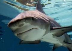 サメのイメージ画像