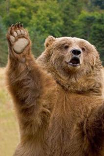 男性襲ったクマを駆除しない方針 厚岸町のイメージ画像