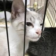 猫の死骸を放置したまま5匹飼育…60代の男「生活が厳しく世話を怠った」のイメージ画像