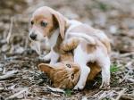 「犬や猫にだって差別がある」と言う研究者 それは生き抜く本能だから