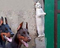 【猫逃亡中!】犬のお巡りさんから必死に隠れる?猫さんに思わず爆笑!!!