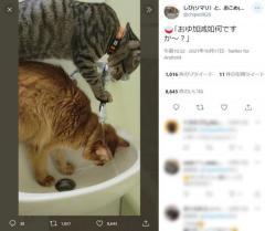 「お湯加減いかがですか~?」美容室での一コマを2匹の猫ちゃんが再現のイメージ画像