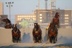 【ばんえい競馬能力検査】出走馬の顔を蹴った騎手への対応についてのイメージ画像