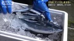 北海道のサンマ流し網漁 水揚げゼロで打ち切りにのイメージ画像
