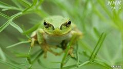 隣の庭のカエルの鳴き声は騒音か? 「自然音」と訴え退ける判決 東京のイメージ画像