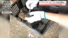 子犬など生きたまま箱詰めに…中国でまた摘発のイメージ画像