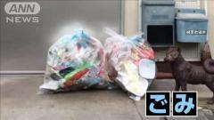"""メダカの水槽に油・玄関前にゴミ…""""悪質""""嫌がらせ 名古屋市のイメージ画像"""