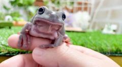 ヒトの指を甘噛みするカエル出現!?カエルの飼い慣らし方を伝授するYouTube動画が話題のイメージ画像