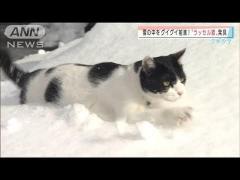 """雪の中グイグイ前進!付いたあだ名は""""ラッセル猫""""のイメージ画像"""