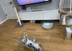 前世は人間? ハンモックを使いこなしてくつろぐ猫さんのイメージ画像