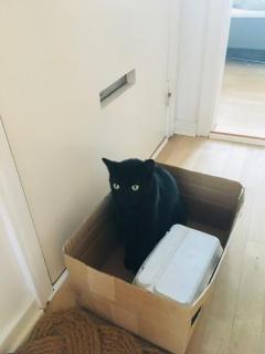 「どうか捨てないで」お気に入りの段ボール箱を守りたい黒猫が無言のアピールのイメージ画像