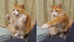 打つべし!打つべし! 猫ボクサーの繰り出す華麗なパンチのイメージ画像
