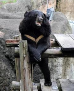 石川・津幡中心部にクマのふん 住宅裏で発見、周辺警戒 14日夜から15日朝にかけ 近くに病院や学校のイメージ画像