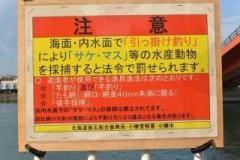 小樽勝納鮭釣り事情のイメージ画像