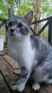 愛猫が極寒の山中に脱走→190日間におよぶ執念の捜索 帰ってきたら目つきが険しいワイルドな猫になっていたのイメージ画像