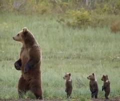夏のクマに襲われたら… 「立ち止まったまま話し掛ける」のイメージ画像