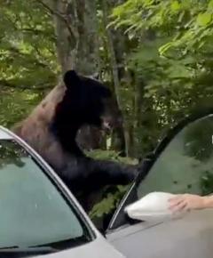 自分の車から出てきたのは巨大なクマだった 凶暴さを物語るボロボロになった車内のイメージ画像