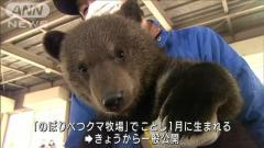 ふわふわ毛並み…赤ちゃんクマ公開 元気に走り回るのイメージ画像