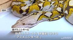 逃走中の3.5mヘビ、自らケージのカギを壊して逃げたかのイメージ画像