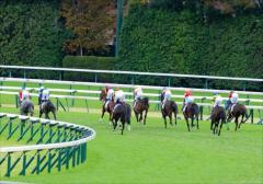 "JRA 名物「珍名馬」オーナーの期待馬が""出世""レースに登場! ユニークな名前を付ける原点と馬名通りになる可能性のイメージ画像"