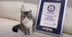YouTube「もち様」が最も視聴された猫としてギネスで世界一に、30~50代の癒される人続出のイメージ画像