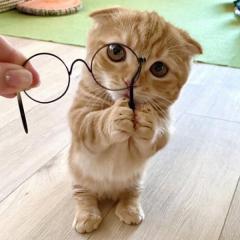 眼鏡を拾ってくれたの?…猫さん「あざと可愛すぎ!」小首をかしげ、両前足でそっと差し出す姿が話題に