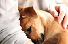 「生活保護」を受けるとペットと暮らせなくなる?のイメージ画像