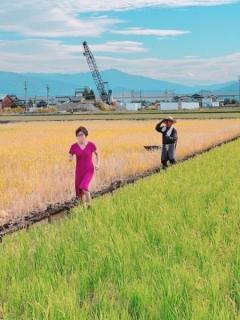稲田朋美氏が謎画像を投稿 ピンクのワンピースで田んぼのあぜ道を激走のイメージ画像