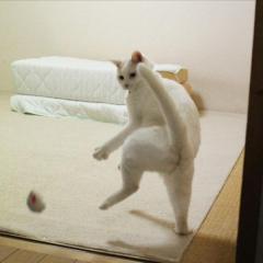 ほれぼれする躍動感、全身で感情を表現する白猫に「どじょうすくい?」「もはや人」のイメージ画像