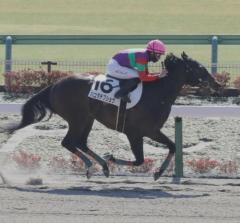 東京4Rが大波乱 3連単は東京競馬では史上最高配当、JRA歴代5位の2073万8890円のイメージ画像