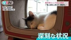 """保護ネコまで…""""まん延防止""""適用で各地に影響のイメージ画像"""