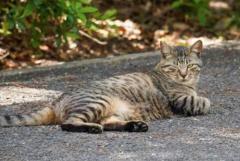 公園の木につるされた猫の死骸 東京・大田区で3匹が不審死のイメージ画像
