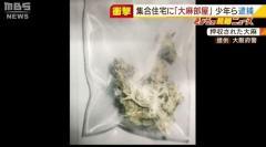 """少年ら逮捕『大麻部屋』に中学生ら10数人が出入り…""""見張りをしたら無料で大麻"""" 大阪のイメージ画像"""