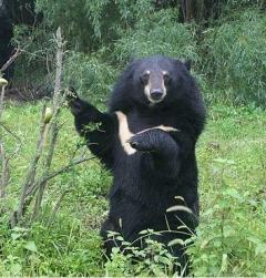 クマが「覆いかぶさり…」男性が襲われ顔をけが 秋田のイメージ画像