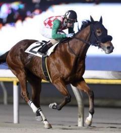 船橋競馬であわや大惨事 前から馬が…のイメージ画像