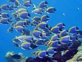 回遊魚のイメージ画像