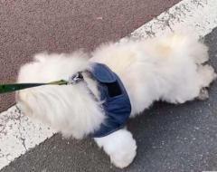工藤静香、老いた愛犬との散歩風景に称賛の声「可愛いくて癒される」のイメージ画像