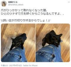 飼い主のツナギで爪を研ぐ猫さん 爪がひっかかってしまいガビーンのイメージ画像