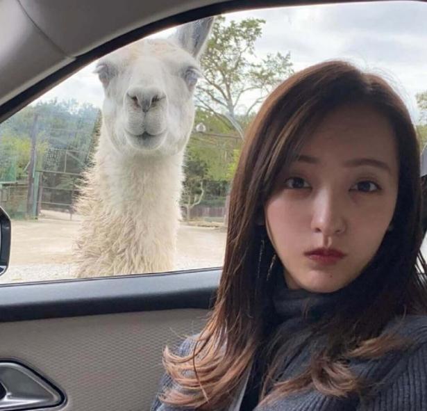 板野友美、「同じ顔?」アルパカとの2ショット写真に大反響