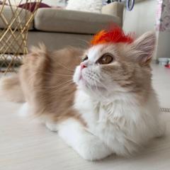 ワイルドなイケメン猫発見 おもちゃが壊れてしょんぼり…からのイメチェンのイメージ画像