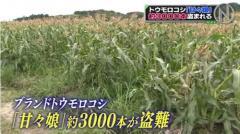 人気トウモロコシ「甘々娘」収穫直前3000本盗難 静岡のイメージ画像