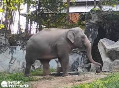 象を殺害のカレン族の男を逮捕、ケーンクラチャン国立公園でのイメージ画像